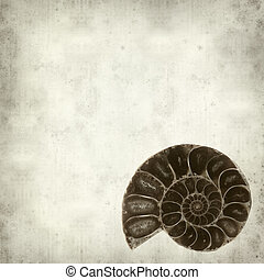 textured old paper background with ammonite