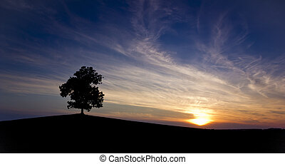 Lone tree. - Lone tree on beautiful violet background after...