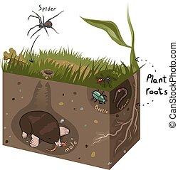 Vector graphic diagram of soil structure