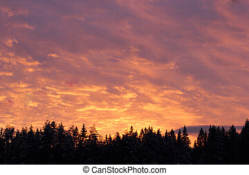 Pink sky over the firs Sunset  background