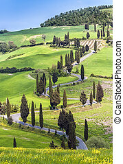 Landscape in Tuscany - Road with curves and cypresses in...