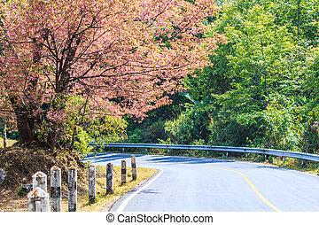 Road wayside have cherry blossom and sakura