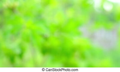 Green bush branch on garden background - Close up view at...