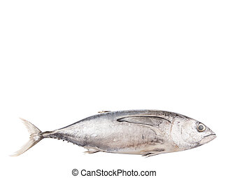 Mackerel Tuna Fish - Mackerel tuna or ikan tongkol over...
