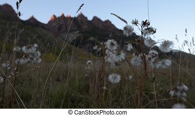 Red Mountains near Maroon Bells Col - Wild Flowers moved by...