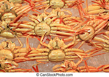 snow crab (Chionoecetes opilio) in Japan