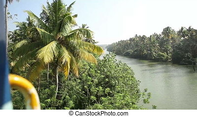 palms and river in India - palms and Jung and river in India...