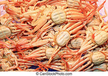 snow crab Chionoecetes opilio in Japan