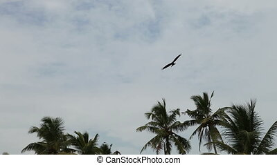 Eagle fly in cloudy sky