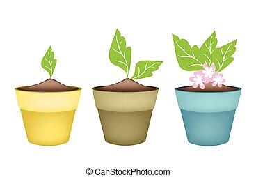 Beautiful Pink Flower in Terracotta Flower Pots -...