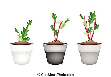 Radish Or Beet Plant in Ceramic Flower Pots - Vegetable,...