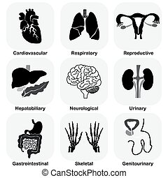 Collection of internal organ (Human system)