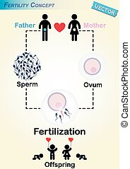 Human Fertilization Diagram ( Man produce sperm , Woman...