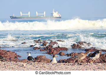 seagulls take a rest on shore in Antofagasta, Chile