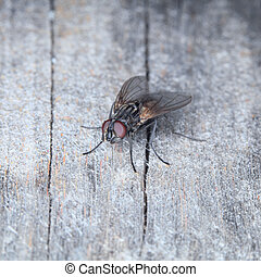 Grey house fly on a surface of old wood