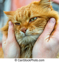 Red cat with green eyes in somebody's hands