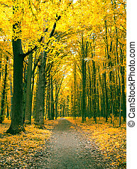 autumn trees  - Colorful autumn trees in forest