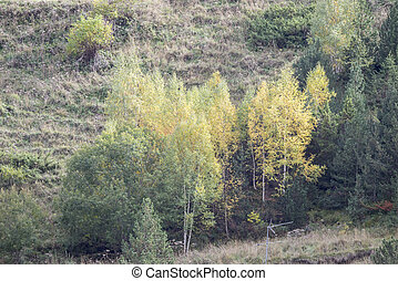 mountains full of vegetation in autumn in Andorra La Vella