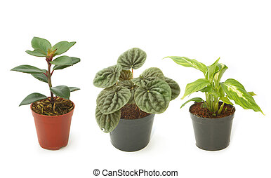 Assorted green houseplants in pots ,Ornamental plants