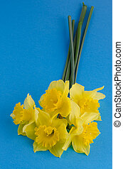 Jonquil flowers - Yellow jonquil flowers on blue background