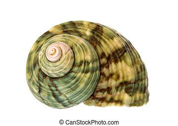 Sea Shell - Isolated macro image of a sea shell.
