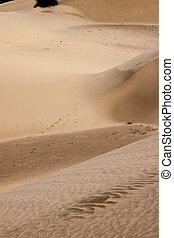 Sand dunes at Thar desert, India