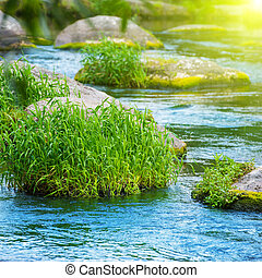 Stream in the tropical forest. Environment sunny landscape...