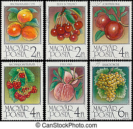 Stamp printed by Hungary shows Apricots