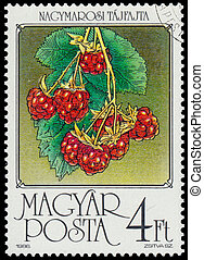 Stamp printed by Hungary shows Raspberries