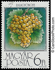 Stamp printed by Hungary shows Grapes