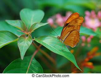 brown longwing Butterfly insect feeding on a green leaf