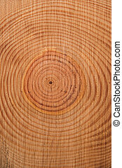 The rings of the pine tree - Details of the rings...