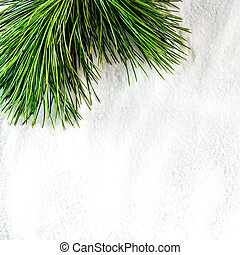pine twig on white snow