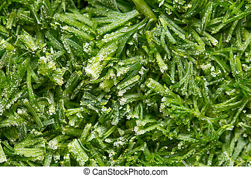 Cutting frozen fresh dill closeup
