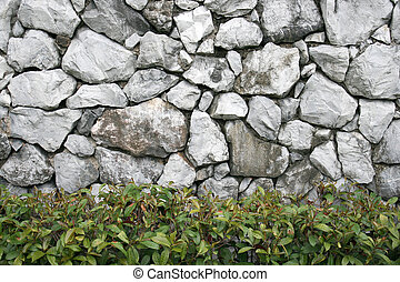 old rock wall with green plant