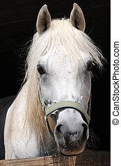 horses eyes - white horse