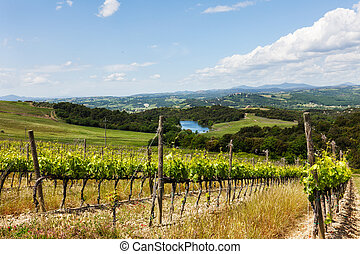 Summer rural landscape with vineyards and the lake in Tuscany, Italy