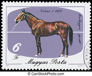 Stamp printed in Hungary shows Horse - HUNGARY - CIRCA 1985:...