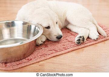 labrador retriever puppy lying down near empty feeding bowl