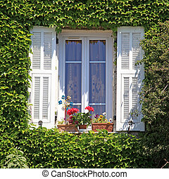 Provence window with white shutters and ivy, Provence,...