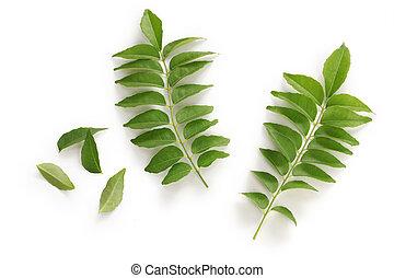 caril, folha, caril, árvore,