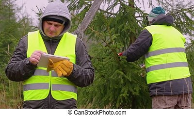 Workers with tablet PC and scissors near the spruce