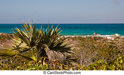 Ocean View - Scenic photograph of the ocean with beach, sand...