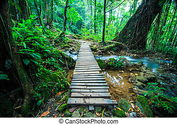wood bridge over the waterfall in Forest