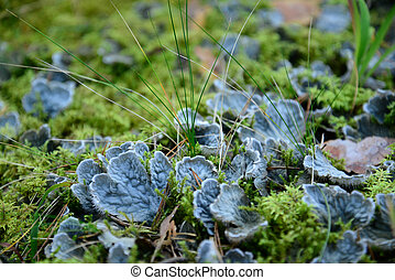 Blue mushrooms in the forest - Photo of blue mushrooms in...