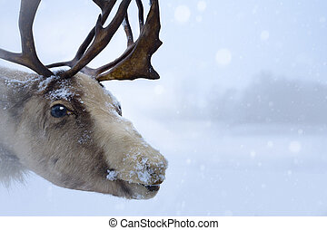 Christmas northern deer - Christmas Santa Claus deer