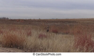 Mule Deer Buck and Doe - a mule deer buck and doe on the...