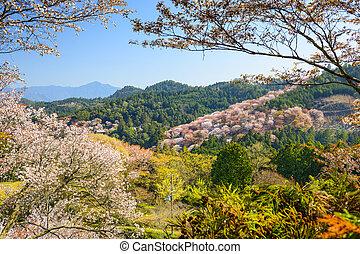 Spring Landscape in Nara, Japan - Yoshinoyama, Nara, Japan...