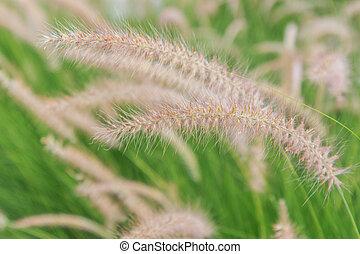 reeds of grass