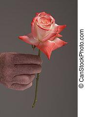 Senior hand holding rose